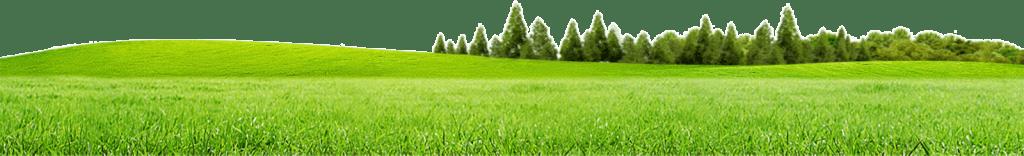 coach-grass