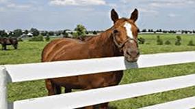 horsefarms1